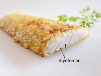 poisson_myotomes