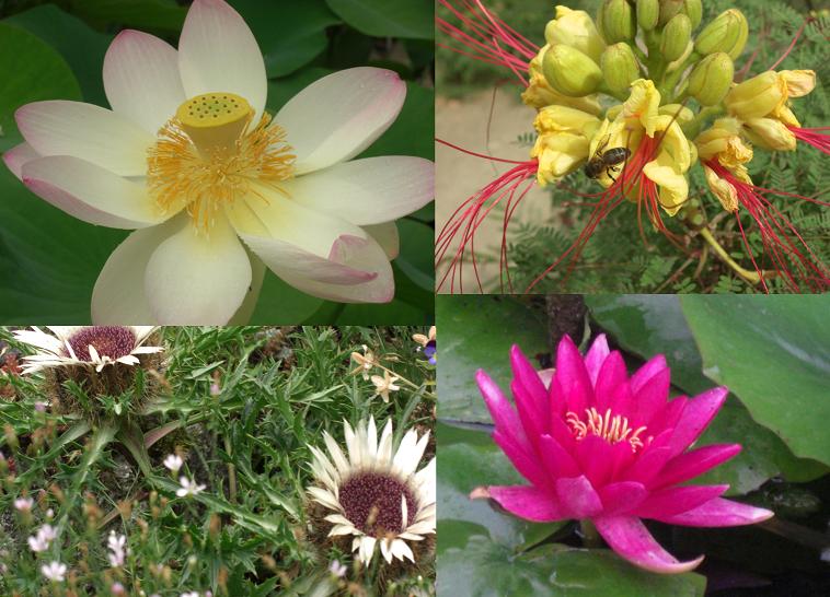 MHN_plantes