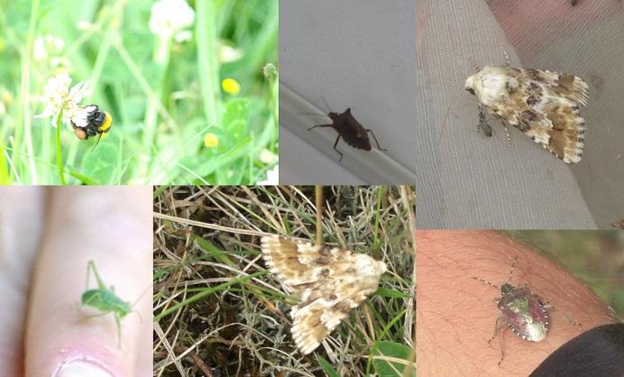 insectes_divers