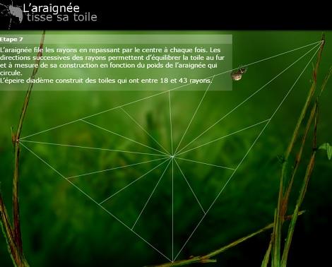toile_araignee_site